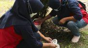 Ember berisi nyamuk Wolbachia ditempatkan dengan metode penyebaran berbasis grid dalam luasan 75 meter persegi. (Foto:nyatanya.com/media TWC)