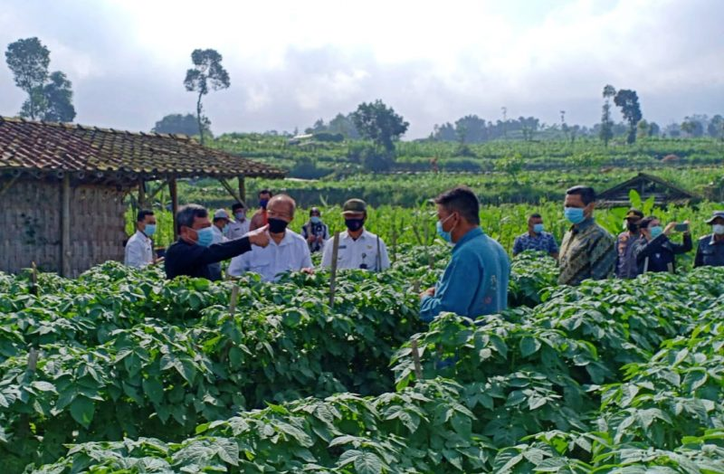 Distanpangan Kabupaten Magelang mendampingi Bupati Garut Rudy Gunawan saat melihat tanaman kentang di Dusun Kenangkan Desa Kragilan Kecamatan Pakis. (Foto: nyatanya.com/Diskominfo Magelang)