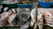 Selain kampanye di sekolah, sosialisasi Gemarikan juga dilakukan kepada ibu nelayan di Demak. (Foto: Diskominfo Jateng)