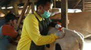 Diimbau agar kegiatan kurban memperhatikan protokol kesehatan. (Foto:nyatanya.com/Diskominfo Jateng)