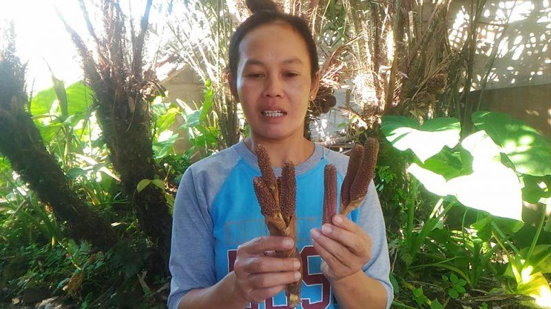 Bunga salak si mungil yang menjadi andalan petani salak nglumut di Kecamatan Sumbung Kabupaten Magelang. (Foto:nyatanya.com/Humas Magelang)