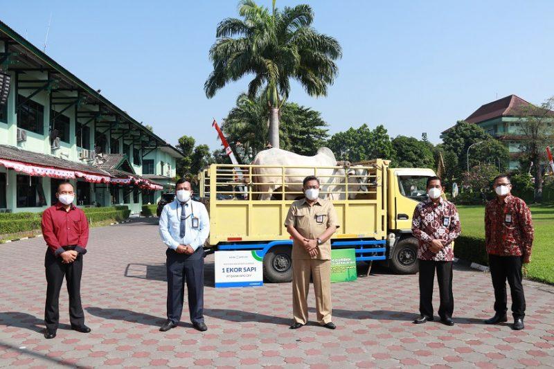 Sapi bantuan Gubernur DIY untuk Pemkot Yogyakarta. (Foto:nyatanya.com/Humas Pemkot Yogya)