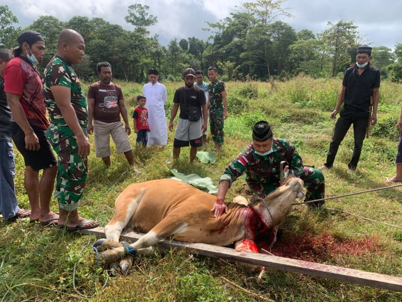 Prajurit Yonif 403 laksanakan penyembelihan hewan kurban [Foto: nyatanya.comistimewa]