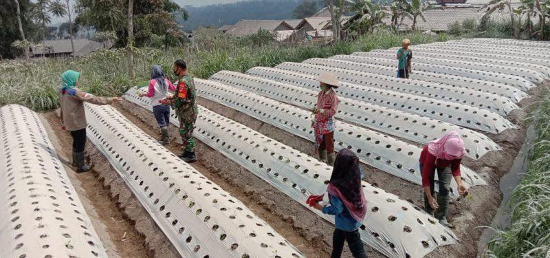 Pembagian masker oleh BPBD Kabupaten Magelang pasca hujan abu vulkanik Gunung Merapi. (Foto:humas/beritamagelang)