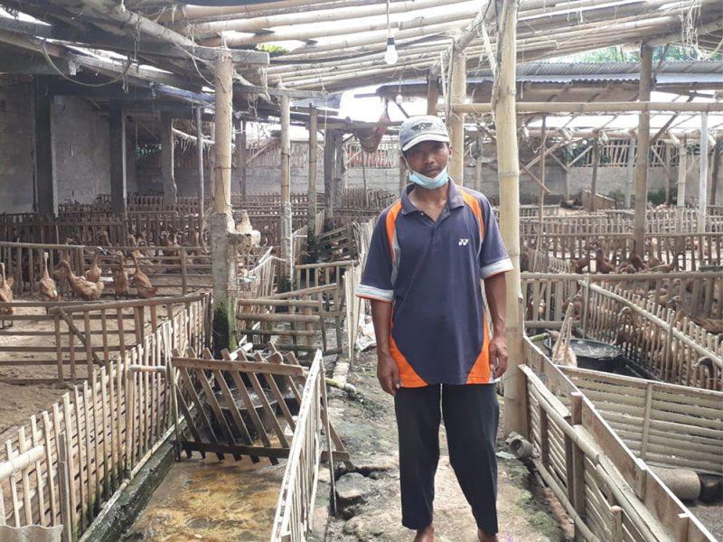 Mulyana, di luar aktivitasnya sebagai guru SD, suskes menjalankan usaha beternak bebek petelur.  (Foto: zainuri arifin)