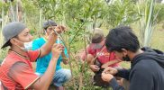 Jasa okulator atau penyambung tanaman di Kajoran Kabupaten Magelang laris di musim kemarau. (Foto: Humas/beritamagelang)