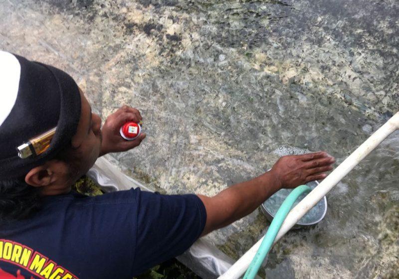 Pembudi daya bibit lele memberikan obat jamur di kolam yang terpapar abu vulkanik Merapi. (Foto:Humas/beritamagelang)