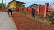 Petani tembakau Windusari menjemur rajangan daun tembakau. Namun, saat ini proses penjemuran terkendala cuaca hujan. (Foto: Humas/beritamagelang)