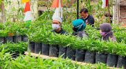 Kelompok Wanita Tani Munawaroh Dusun Blederan, Desa Blederan Kecamatan Mojotengah Wonosobo dengan hasil pertaniannya. (Foto: Diskominfo Wonosobo)
