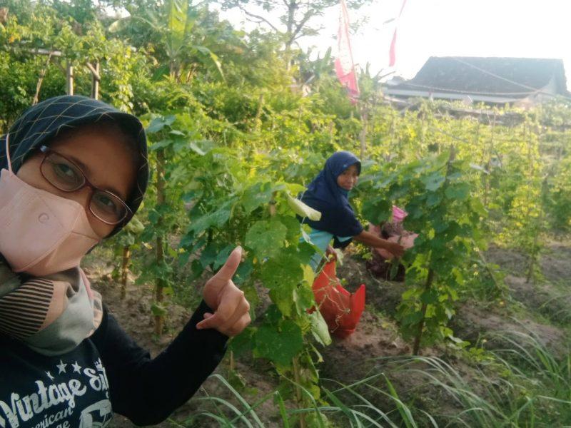 Kelompok Tani Dewasa (KTD) Pelangi menyulap lahan tidur yang tidak terawat menjadi lahan produktif dengan cara budidaya berbagai tanaman sayuran. (Foto: Humas Pemkot Yogya)