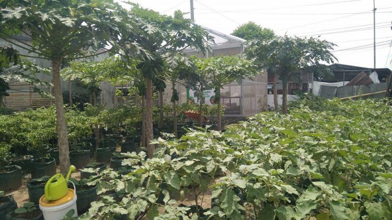 Kebun sayur yang dikelola Klomtan Lohjinawi di RT 20 RW 06 Kelurahan Tegalrejo. (Foto: Humas Pemkot Yogya)