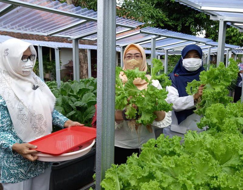 Kelompok Wanita Tani Purwotani panen hasil tanam hidroponik. (Foto: Humas Pemkot Yogyakarta)