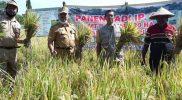 Kepala Dinas Pertanian Boyolali Bambang Jiyanto bersama petani Desa Donohudan Kecamatan Ngemplak melakukan panen padi dengan konsep IP Padi 400. (Foto: Diskominfo Boyolali)