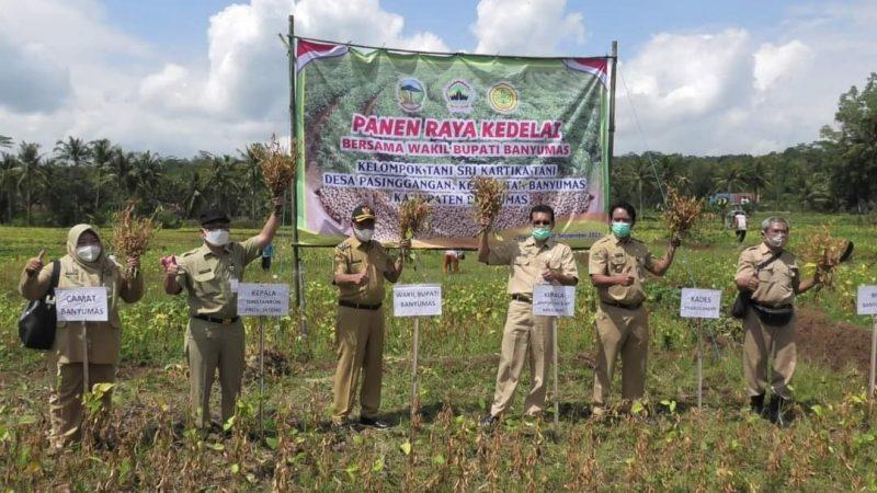 Panen raya kedelai diselenggarakan di lahan seluas 25 hektare yang dikelola oleh Kelompok Tani Sri Kartika Tani. (Foto: Diskominfo Banyumas)