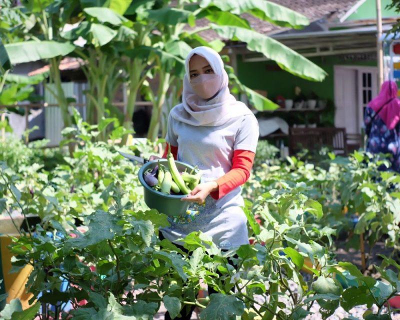 Dengan menggarap lahan nganggur menjadi kebun sayur, kelompok tani ibu-ibu PKK Srikandi Desa Jetis Wetan ini berharap dapat menginspirasi masyarakat dalam bidang pertanian. (Foto: Diskominfo Klaten)