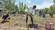 Presiden Jokowi melakukan Penanaman Pohon Mangrove di Desa Tritih Kulon, Kecamatan Cilacap Utara, Kabupaten Cilacap, Jawa Tengah (23/9/2021). Rehabilitasi mangrove tahun 2021 ditargetkan seluas 34.000 hektar di tanah air dalam rangka memulihkan, melestarikan kawasan hutan mangrove serta mengantisipasi perubahan iklim. (ANTARA FOTO/Setpres-Agus Suparto/foc)