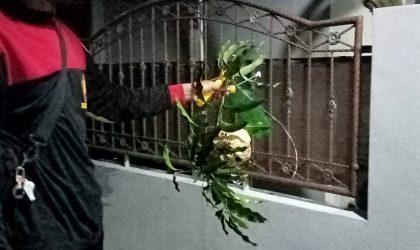 Salah satu anggota Komika Klaten menunjukkan hasil operasi tangkap tawon alias OTT. (Foto: Diskomindo Klaten)