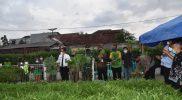 Wakil Walikota Yogyakarta Heroe Poerwadi melakukan panen sayur di kebun Loh Jinawi Tegalrejo pada Kamis (21/10/2021). (Foto: Humas Pemkot Yogya)