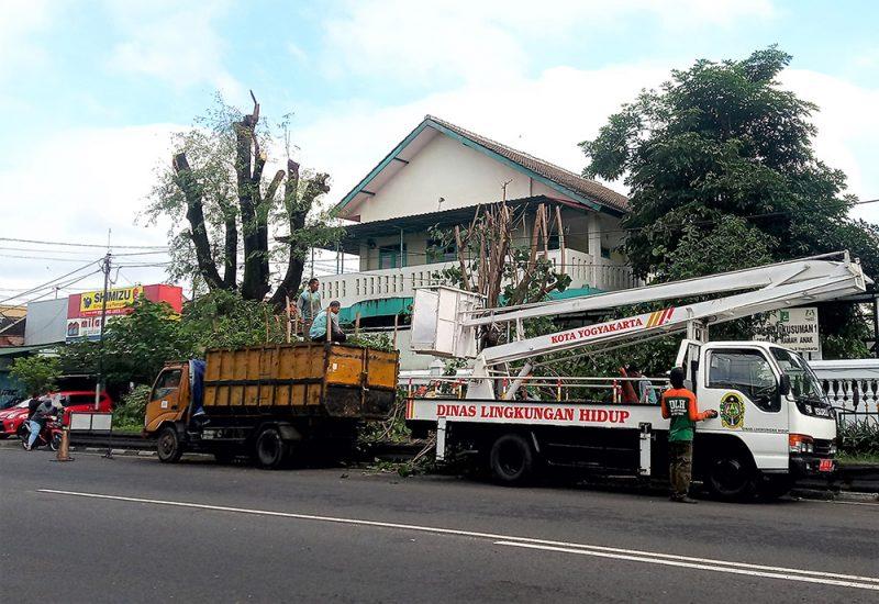 Dinas Lingkungan Hidup (DLH) Kota Yogyakarta mengintensifkan pemangkasan pohon-pohon perindang yang rimbun. (Foto: Humas Pemkot Yogya)