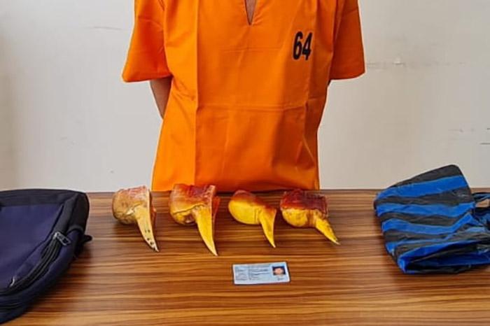 Pelaku dengan barang bukti 4 paruh burung rangkong yang akan dijual Rp2-3 juta. (Foto:Mediacenter Riau)